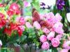 jardim-da-helena-fotgrafo-rodrigo-pacheco
